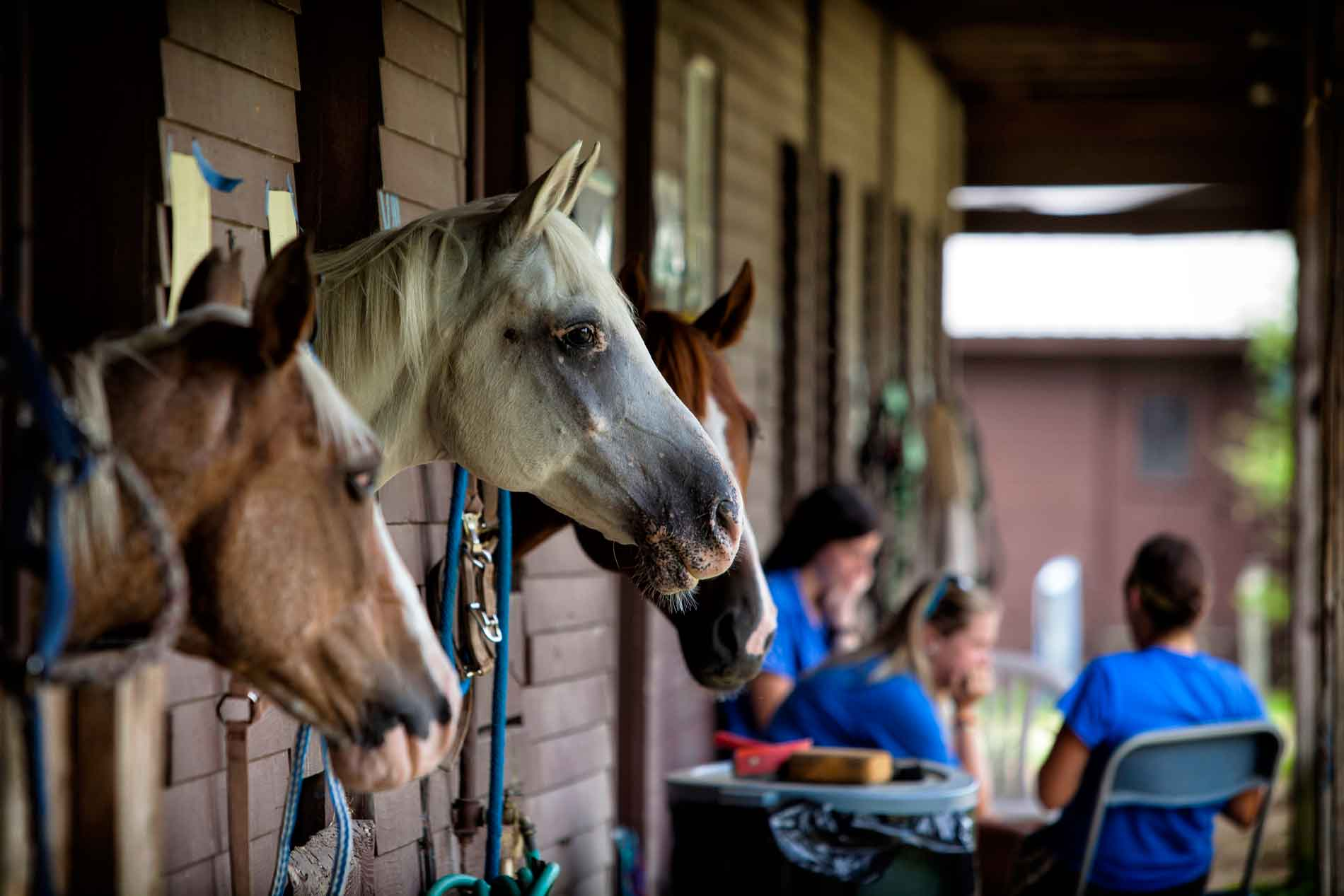 Horse riding stables